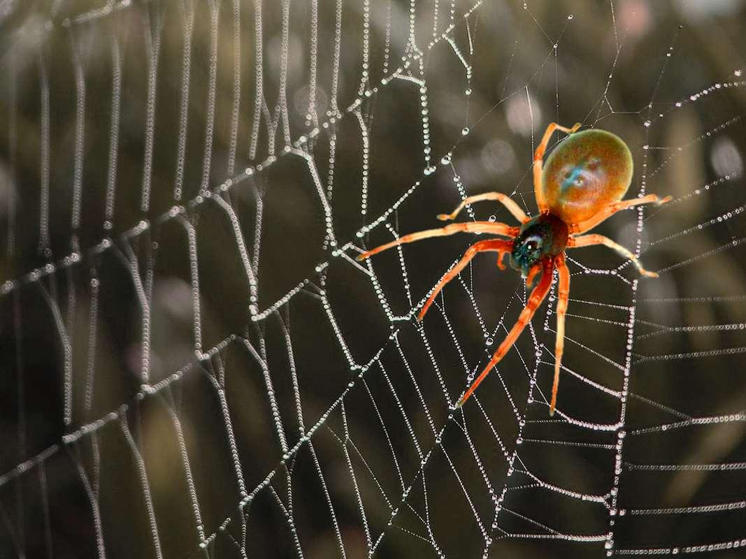 Spiritual Spiders